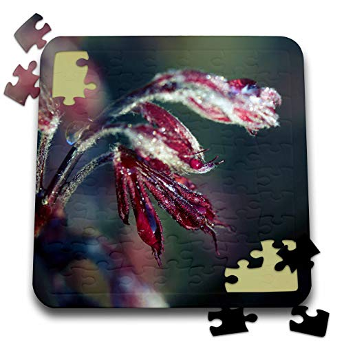 3dRose Stamp City - Nature - Photograph of red Japanese Maple Leaves Covered in Morning Frost. - 10x10 Inch Puzzle (pzl_308748_2)