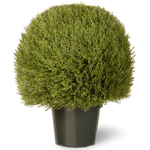 National Tree 24 Inch Cedar Pine Topiary in Green Pot (LCPT4-700-24) (Pine Pot Artificial)