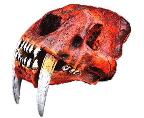 Gmasking Resin Sabertooth Tiger Skull 1:1 Scale Replica for sale  Delivered anywhere in USA