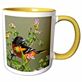3dRose Danita Delimont - Birds - Baltimore Oriole bird, South Padre Island, Texas, USA - US44 LDI0738 - Larry Ditto - 11oz Two-Tone Yellow Mug (mug_146863_8)