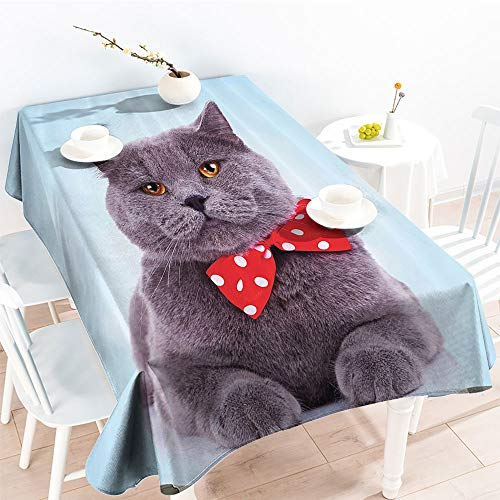 - Jinguizi Rectangular Table Covers Tuxedo Gray Scottish Fold Theme with Red White Polka Dots Tie Bow Baby Blue Funfor Party/Picnic TableclothSky Blue Dimgrey(50 by 80 Inch Oblong Rectangular)