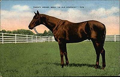 Twenty Grand, Bred In Old Kentucky Lexington Original Vintage Postcard