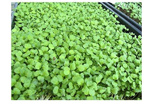 Certified Organic Microgreens Growing Kit - Grow & Eat Microgreens : Trays, Seed, Soil, Mineral Fertilizer & More