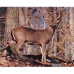 TSlook Whitetail Buck Deer Home Welcome Door Mat Rug(32x18,L x W)