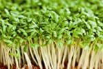 Just Seed Cress - Common Plain - 60g...