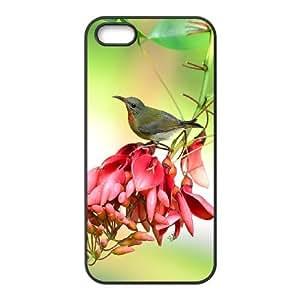 Iphone 5,5S Bird Phone Back Case Art Print Design Hard Shell Protection YT014159
