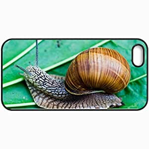 Personalized Protective Hardshell Back Hardcover For iPhone 5/5S, Grape Snail List Design In Black Case Color