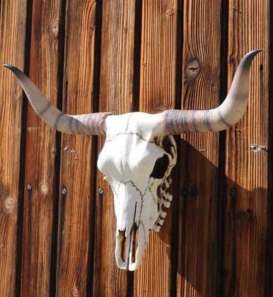 Bullenschädel Bullen Schädel Skull Wicca Country Western Metal LARP