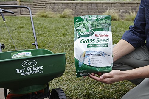 ★★★★★ TOP 49 BEST FESCUE GRASS RATING 2018 - Magazine cover