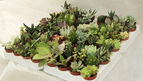 piante grasse online prezzi