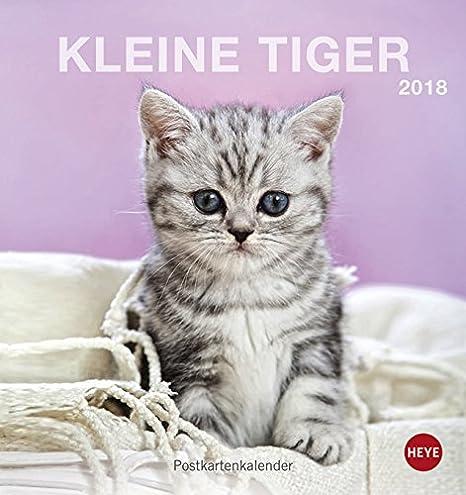 Heye Gatos pequeños Tiger Postal 2018 Mes Calendario 2157: Amazon.es: Oficina y papelería