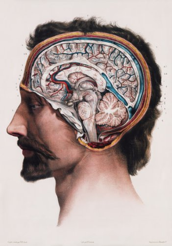 Vintage 1800's Medical Human Brain Surgical Anatomical Anatomy Poster Re-Print - A2+ mm