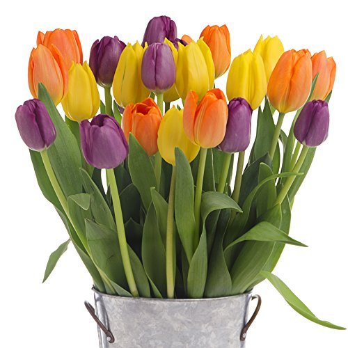 Stargazer Barn - 24 Stems Multi-Colored Tulips with Rustic Décor Style Galvanized Vase - Direct From Farm - 2 Dozen Tulips - Sustainably Grown in California - Colorful Flowers - Multi-Color Flowers by Stargazer Barn