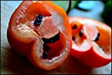 Rare RED Skinned Manzano Chilli Pepper Capsicum Pubescens Extremely Hot 5 SEEDS