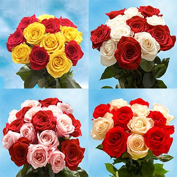 GlobalRose 50 Fresh Cut 25 Red 25 Color Roses - Fresh Flowers Express Delivery - Perfect for Birthday, Anniversary or any occasion.