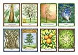 The Wisdom of Trees Oracle: Inspirational Cards for