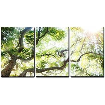 wall26 - Big Tree with Sun Light - Canvas Art Wall Decor - 24