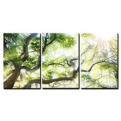 Delightful Print, Professional Creation, Big Tree with Sun Light Wall Decor x3 Panels
