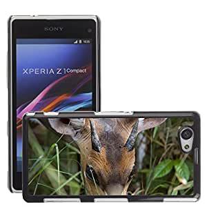 Super Stella Slim PC Hard Case Cover Skin Armor Shell Protection // M00105413 Antelope Africa National Park // Sony Xepria Z1 Compact D5503