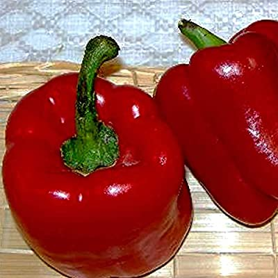 Autumn Bell Sweet Pepper Garden Seeds - Non-GMO, Heirloom Vegetable Gardening Seed