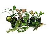 20 Gallon Tropical Vivarium Plant Kit
