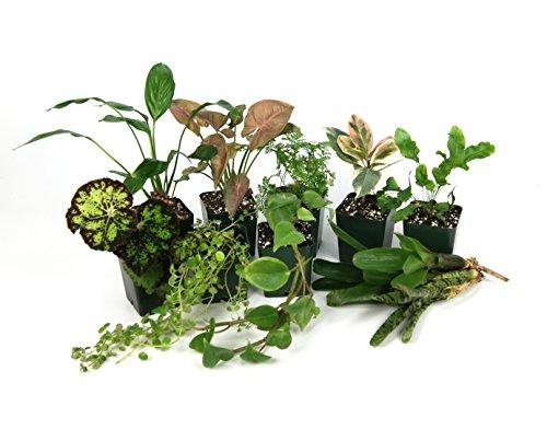 20 Gallon Tropical Vivarium Plant Kit by Josh's Frogs