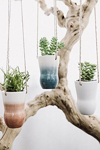 Color Washed Hanging Succulent Planter, 3in pot with Live Plant Houseplant Home Decor by Root 98 Warehouse