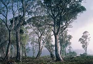 Póster mural gigantografia impresión digital de alta resolución Komar en papel-Fantasy Forest-mis. 368 x 254 cm modelo 8-523 -