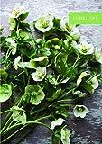 Floret Farm's Cut Flower Garden 2018 Daily Planner