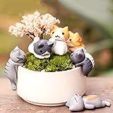 Meolin 1Set / 6pcs Cartoon Cat Micro Landscape Garden Decorations Miniature Craft Home Decor Review
