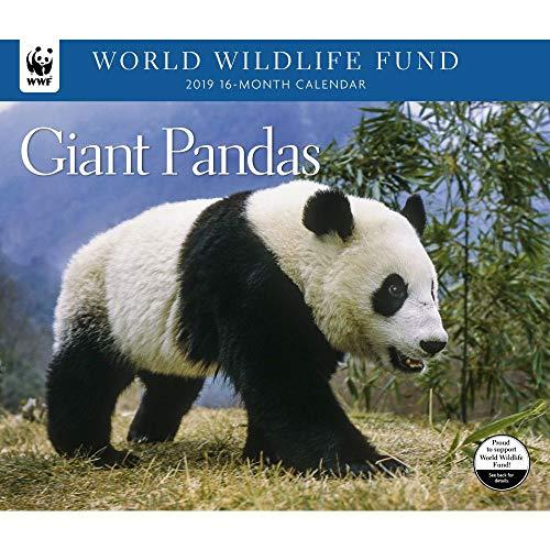 2019 Giant Pandas WWF Wall Calendar, by Calendar Ink