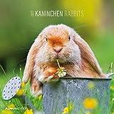 Kaninchen 2017 - Rabbits - Broschürenkalender (30 x 60 geöffnet) - Tierkalender - Wandplaner