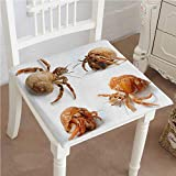 Dining Chair Pad Cushion Sea Animals Theme Set of Hermit Crabs from Caribbean Sea Digital Print Marigold Fashions Indoor/Outdoor Bistro Chair Cushion 20''x20''x2pcs