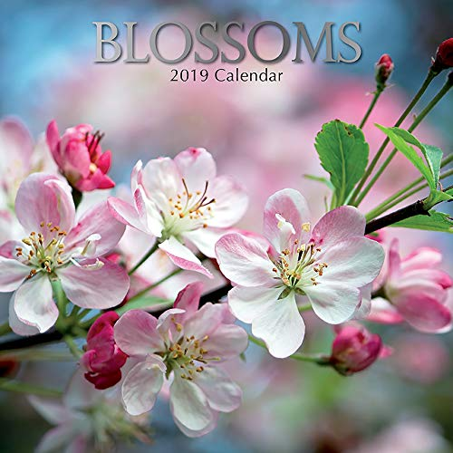 2019 Wall Calendar - Floral Blossoms Calendar, 12 x 12 Inch Monthly View, 16-Month, Blooms and Flowers Theme with Cherry Blossoms, Includes 180 Reminder Stickers