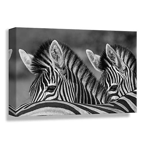 (B2T Monochrome Wildlife Mighty Zebra Nature Animal, Canvas Wrap - 24x36 inches)