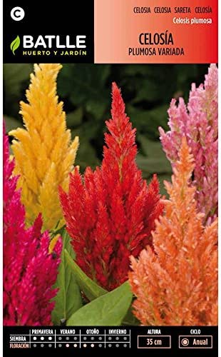 Semillas de Celosía plumosa variada: Amazon.es: Jardín