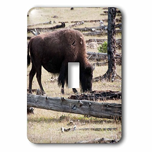 Bison Grass - 3dRose Jos Fauxtographee- Bison Grazing - A Bison grazing on grass in Yellowstone National Park - Light Switch Covers - single toggle switch (lsp_266363_1)