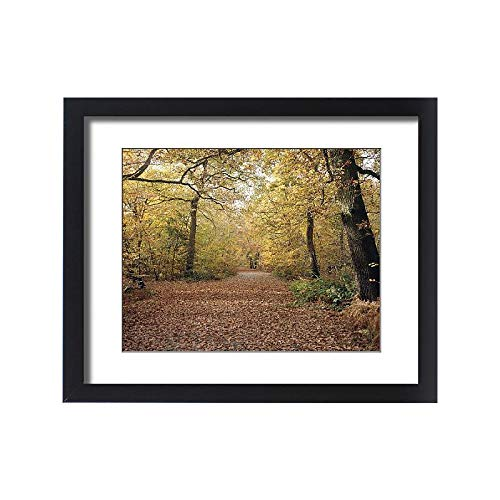 Media Storehouse Framed 20x16 Print of Sunlight Through Autumn Forest Leaves (18253433) (Buckinghamshire Light)