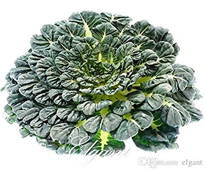 Amazon Com Pinkdose Black Cabbage Vegetable Seeds Asian