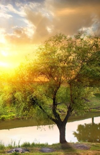 Journal: Majestic Tree at Sunrise: Lined Journal, 120 pages, 5.5