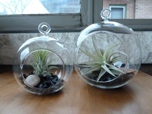 Hanging Glass Terrariums Flat Combo product image