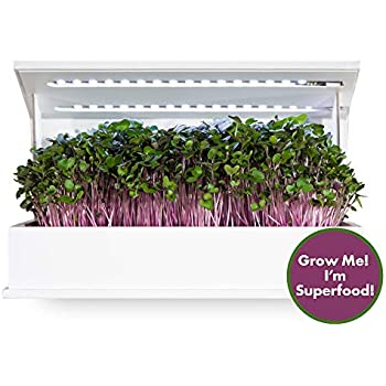 Amazon.com : Grow Book Cruciferous Edition, Countertop Herb Garden, Complete Indoor Garden