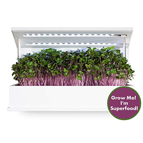 Herb Garden Kit With Grow Light in US - 6