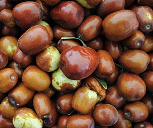 Picture of Jujube Fruit - Red Date Chinese - Zizyphus Jujuba Ayurveda - Sugar Jujube - Big Fruit - 1Lbs