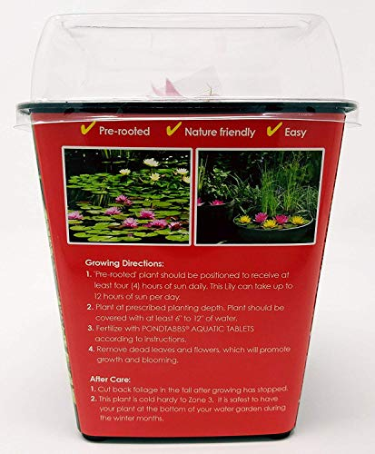 Live Water Lilies   Pre-Grown Hardy Lilies in White, Red, Yellow, Pink (Red) by AqualLeaf Aquatics (Image #2)