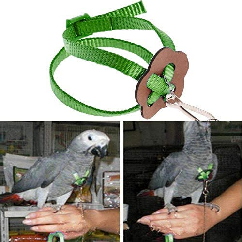 KOBWA Bird Leash, Arnés y Correa Ajustables Anti mordeduras para ...