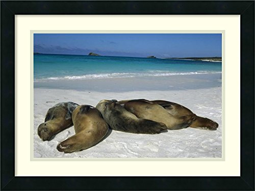 framed-art-print-galapagos-sea-lion-group-sleeping-on-beach-galapagos-islands-ecuador-by-tui-de-roy