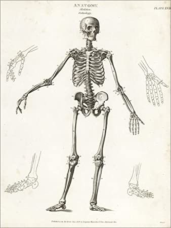 Posterlounge Alu Dibond 90 x 120 cm: Anatomie des menschlichen ...