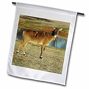Jackie Popp Nature n Wildlife Animals - Brahman Cow - 18 x 27 inch Garden Flag (fl_50421_2)