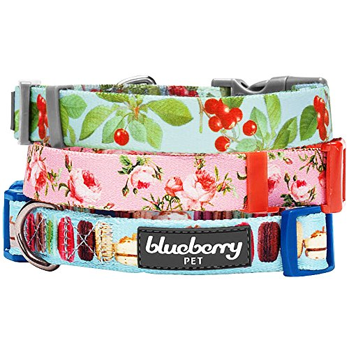 Blueberry Pet 1-Inch The Cherry Garden Designer Basic Polyester Nylon Dog Collar Large Turquoise